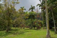 Гаваиский дождевой лес в Koolaus стоковое изображение rf