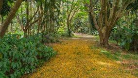 Гаваиский дождевой лес в Koolaus стоковые изображения rf