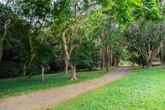 Гаваиский дождевой лес в Koolaus стоковое фото