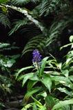 Гаваиский цветок Стоковая Фотография