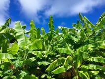 Гавайские островы kauai Стоковые Изображения