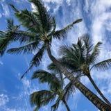 Гавайские пальмы стоковое изображение rf
