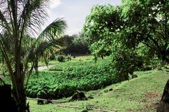 Гавайский сад вне парка пляжа Haena, Кауаи, Гаваи, США стоковые фотографии rf