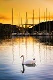 Гавань лебедя Стоковые Фото