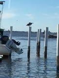 Гавань Шарлотты взгляда глаза ` s птицы, Punta Gords, Флорида Стоковая Фотография RF