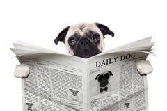 Газета собаки Стоковое фото RF