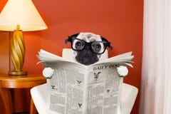 Газета чтения собаки дома Стоковые Фото