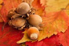 Гайки на осенних листьях Стоковое Изображение RF