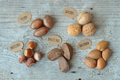 Гайки: пекан, грецкий орех, фундук, гайка Бразилии и миндалина Стоковое Изображение