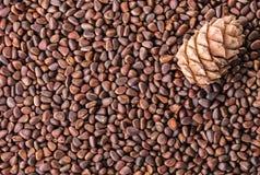 Гайки сосны и крупный план конуса сосны Стоковое фото RF