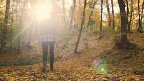 Гай идя в лиственный лес осени быть один и восхищать природа, уединение сток-видео