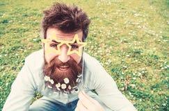Гай смотрит славно с цветками маргаритки или стоцвета в бороде Концепция весеннего времени Битник с бородой на жизнерадостной сто стоковые фотографии rf