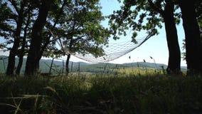 Гамак качания под деревьями около виноградников видеоматериал