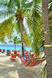 Гамак между пальмами на пляже Curacao стоковые изображения rf