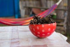 Гамак на бабушке в саде Плита с конусами сосны Стоковая Фотография