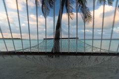 Гамак под пальмами, прифронтовой взгляд веревочки, Aitutaki, Острова Кука стоковая фотография rf