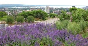 Гамильтон, Канада, горизонт с цветками в переднем 4K сток-видео