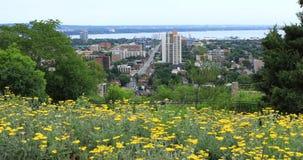 Гамильтон, Канада, центр города с цветками в переднем плане 4K акции видеоматериалы