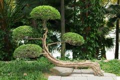 Гармоничный китайский сад Стоковые Изображения