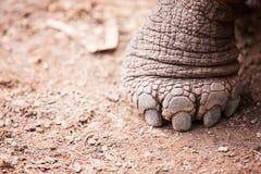 Галапагос нога гигантских черепах Стоковое Фото
