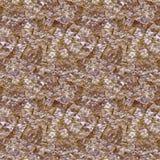 Галиотис карамельки Стоковое Фото