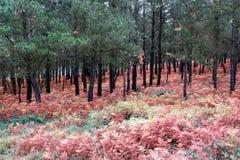 Галиция красит осень стоковая фотография rf