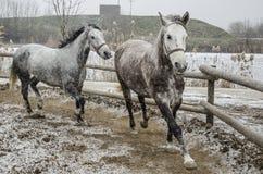 Галлоп зимы стоковое фото rf