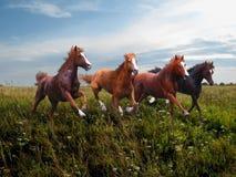 Галоп диких лошадей вдоль травы стоковое изображение