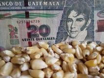 Гватемала, страна-производитель маиса, сухие зерна мозоли и гватемальская банкнота 20 quetzales стоковое фото