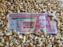 Гватемала, страна-производитель маиса, сухие зерна мозоли и гватемальская банкнота 10 quetzales стоковые фотографии rf