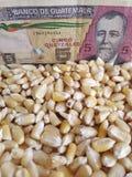 Гватемала, страна-производитель маиса, сухие зерна мозоли и гватемальская банкнота 5 quetzales стоковые фото