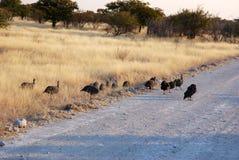 Гвине-птиц Стоковые Изображения RF