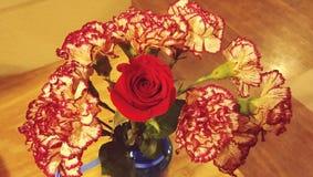 Гвоздики и Роза Стоковое Изображение RF