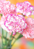 гвоздики Стоковые Фотографии RF