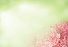 гвоздика Стоковое Фото