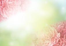 гвоздика Стоковая Фотография