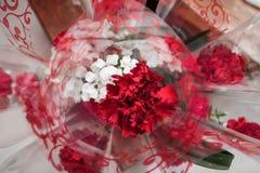 гвоздики красные Стоковые Изображения RF