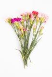 гвоздики цветастые Стоковые Изображения