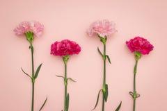 Гвоздики цветка Стоковая Фотография