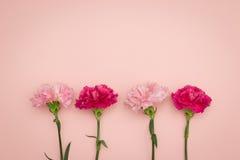 Гвоздики цветка Стоковое Изображение RF