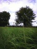 Где высокорослая трава растет стоковое изображение rf