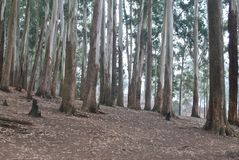 Где деревья растут одичалые зеленые цвета Стоковые Изображения