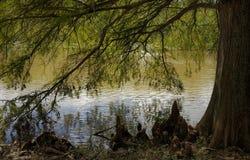 Где озеро встречает дерево Стоковое Изображение