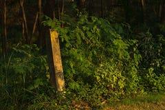 Где-то в людях Forest Park Shi Стоковые Фото