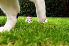 Где яичко характера Waldo с смешным выражением лица в траве Стоковые Изображения