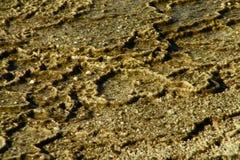 Гейзеры 7 национального парка Йеллоустона Стоковое фото RF