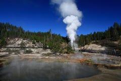 Гейзер извергая в Йеллоустоне Стоковые Фото