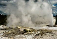 Гейзер Новой Зеландии стоковая фотография