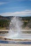 гейзер yellowstone Стоковые Фотографии RF