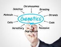 генетика Стоковые Фото